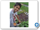 School garden - students get involved!