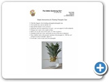 Simple instructions for planting pineapples